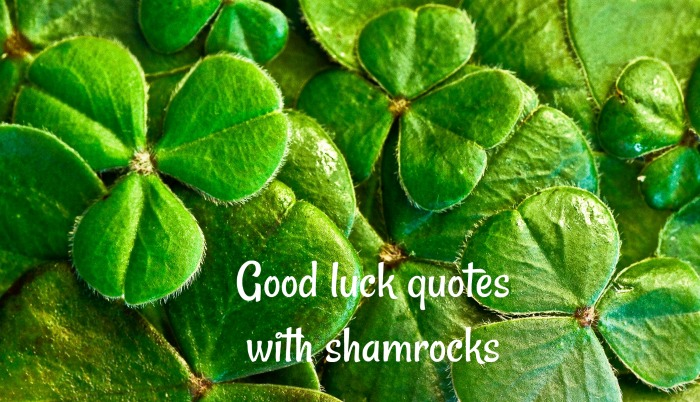 3 leaf clovers with text reading Good luck quotes with shamrocks.