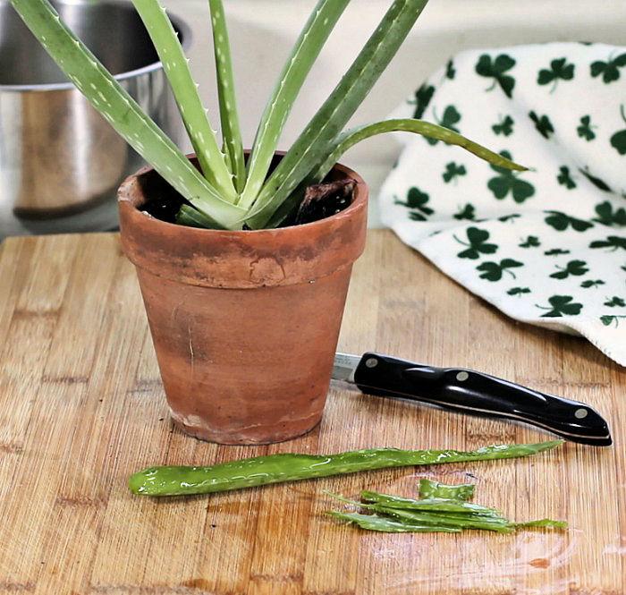 Aloe vera leave cut with gel inside