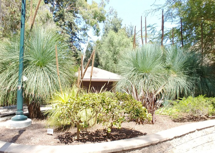 Australia Exhibit at the LA botanical Gardens