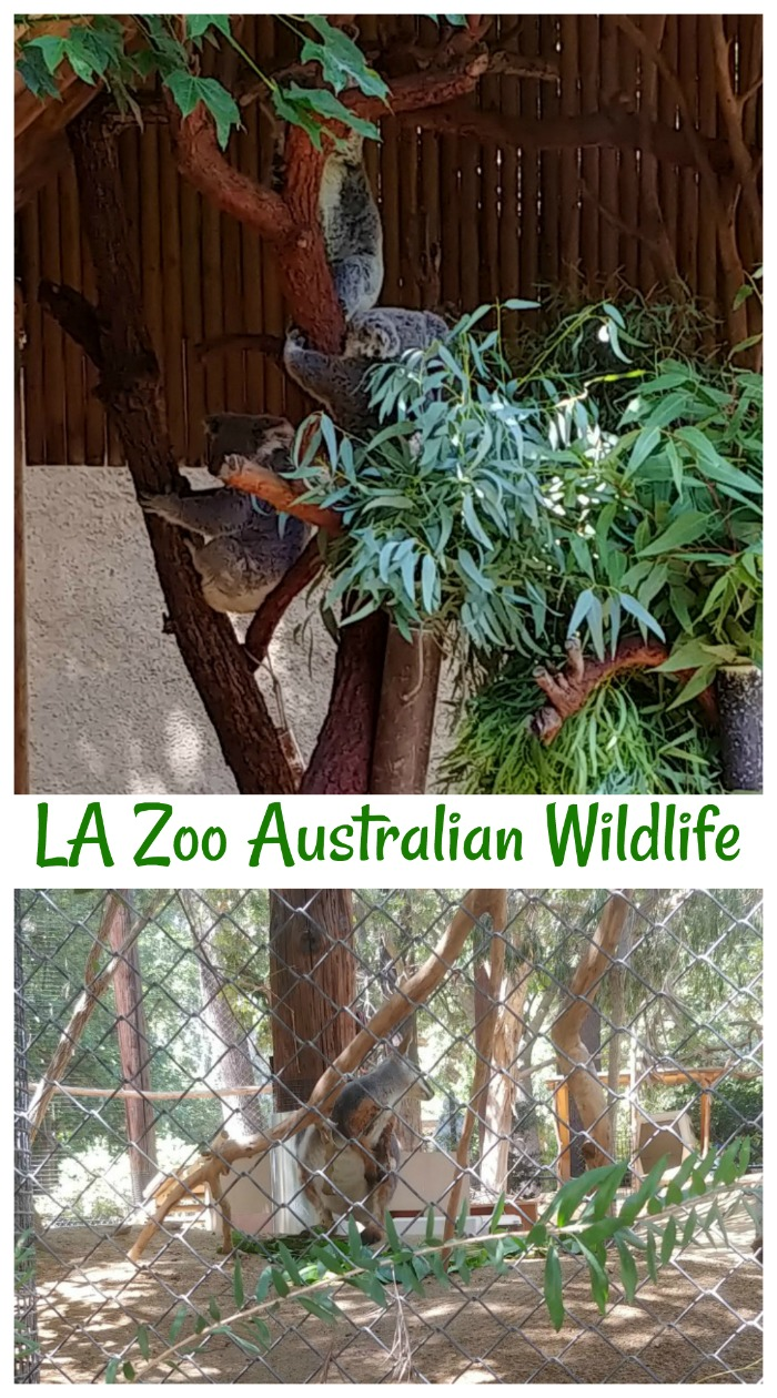 Australian wildlife at the LA Zoo