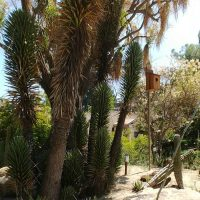 Baja birdhouse at the La Zoo