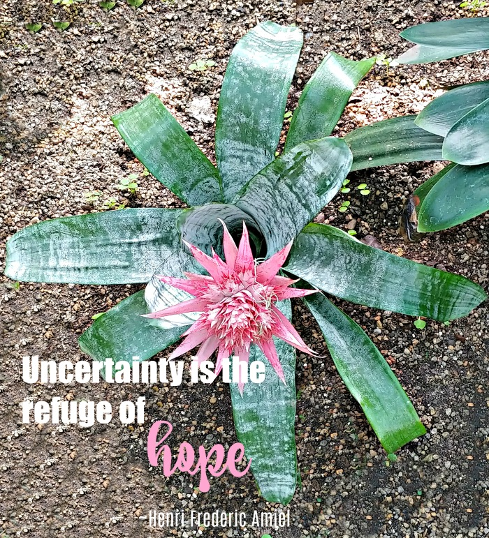Uncertainty and hope quote