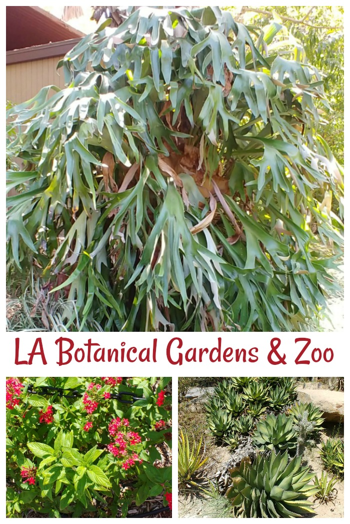 LA Botanical Gardens plants