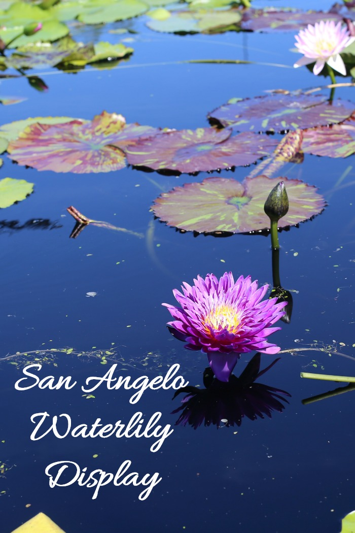 San Angelo Waterlily Collection