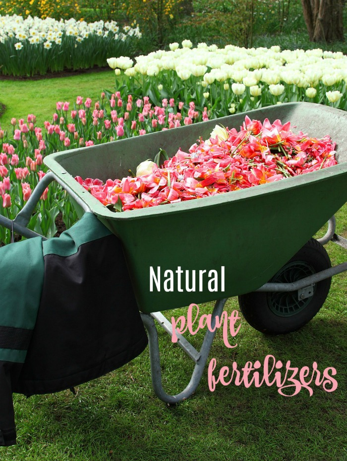 5 home made plant fertilizers