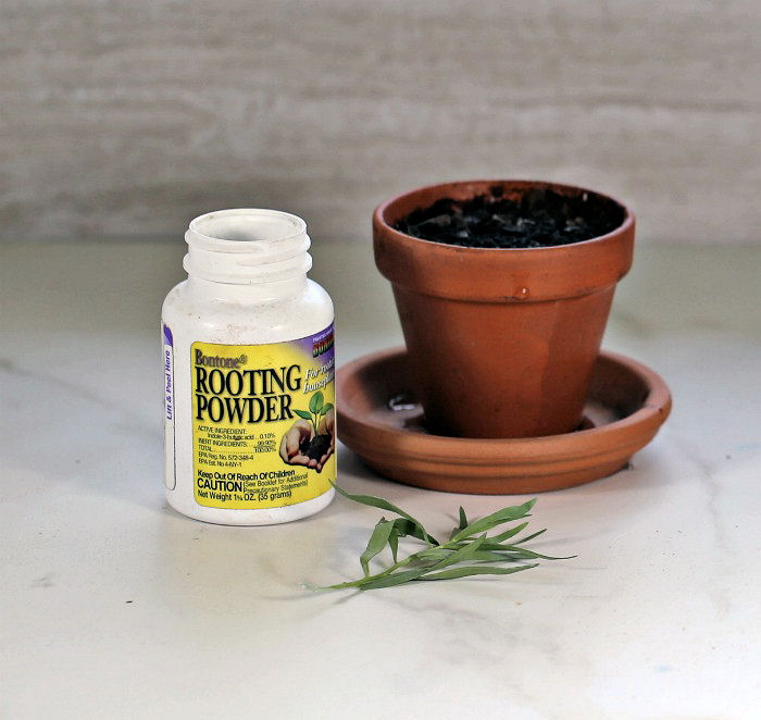 tarragon cutting, plant pot and some rooting powder