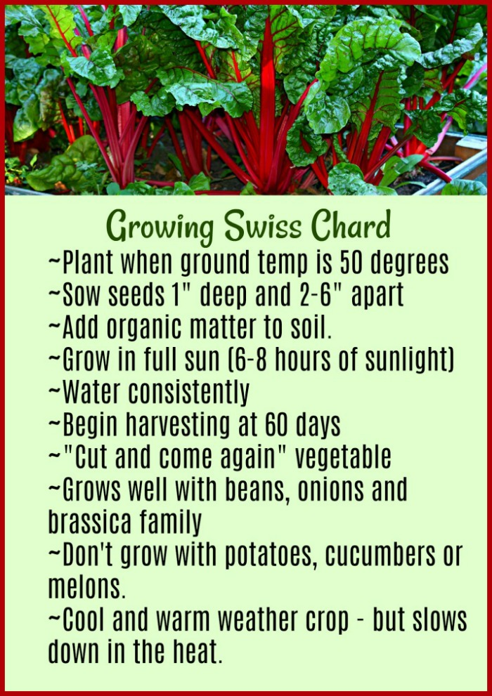 Swiss chard growing tips printable