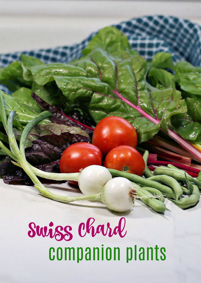 SWiss chard companion plants