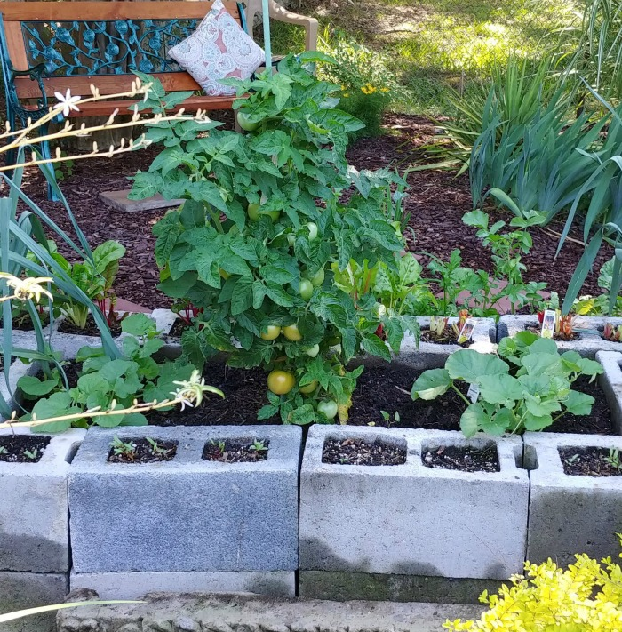 tomatoes and melons in a raised bed for garden vegetables