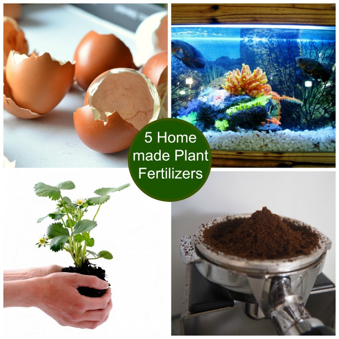 DIY Garden Ideas on a budget - Learn hwo to make five plant fertilizers