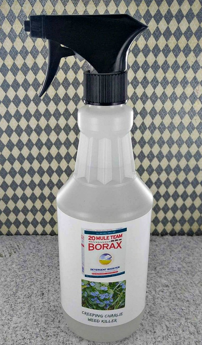 DIY Garden Ideas on a budget - Borax Weed Killer for Creeping Charlie
