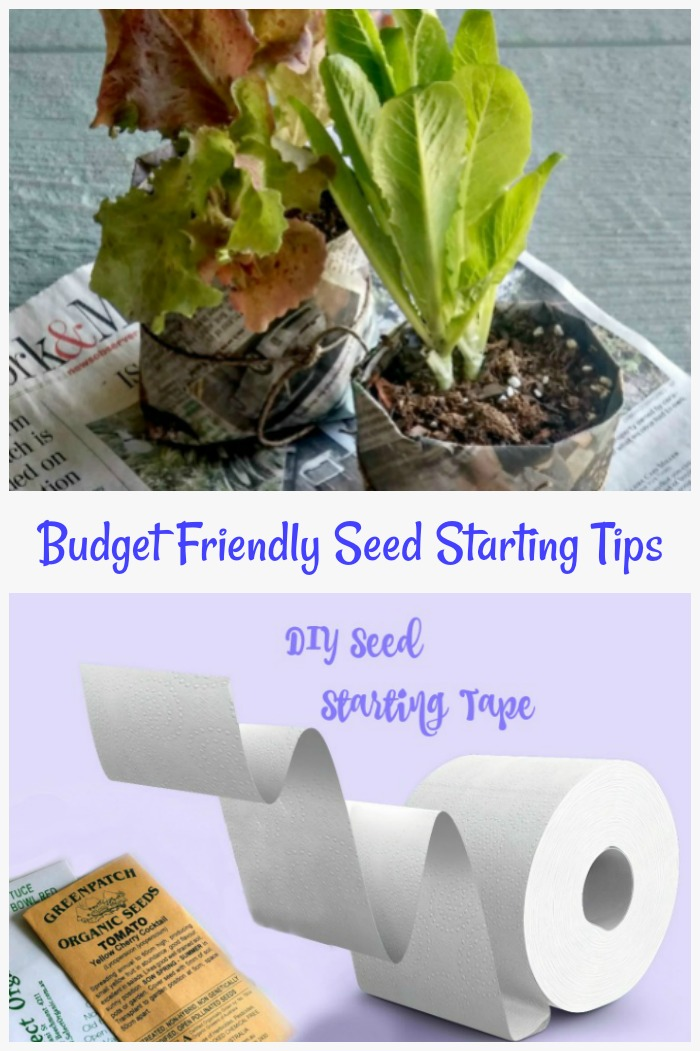 budget Friendly seed starting tips