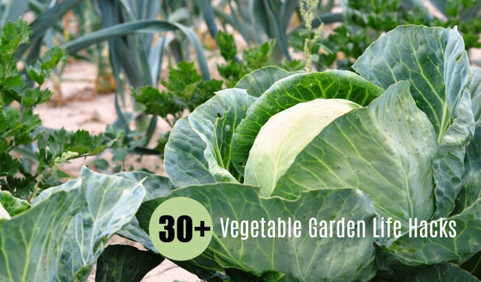 DIY Garden Ideas on a budget - 30+ Vegetable garden Life Hacks