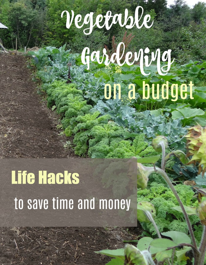 Vegetable gardening on a budget