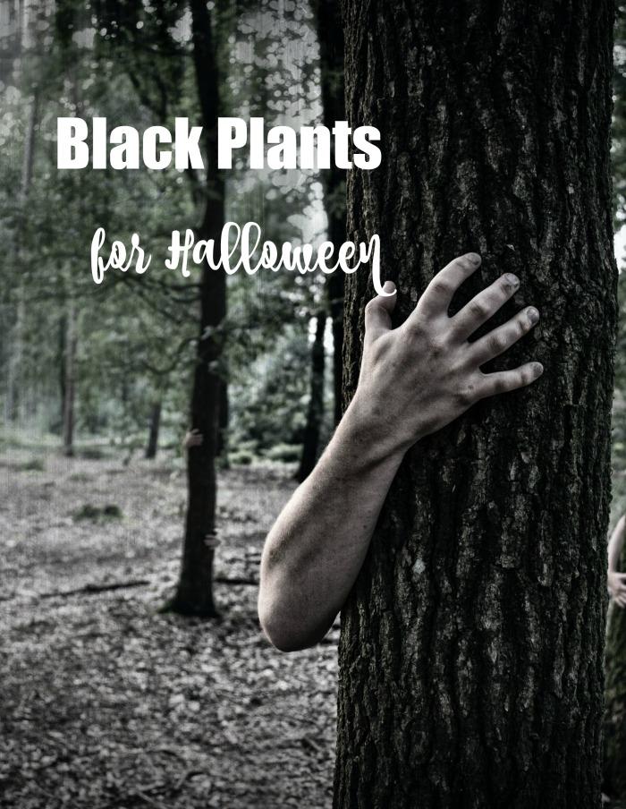 Hand around tree - Black plants for Halloween