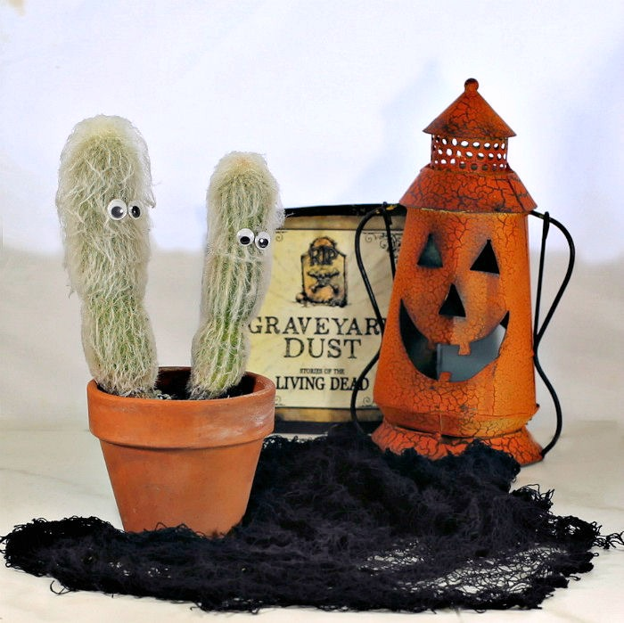 Halloween plants like old man cactus add to your holiday decor