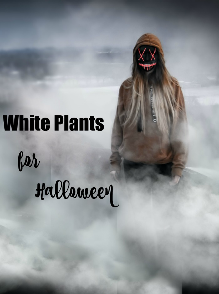 White plants for Halloween