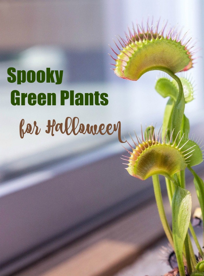 Spooky green plants for Halloween