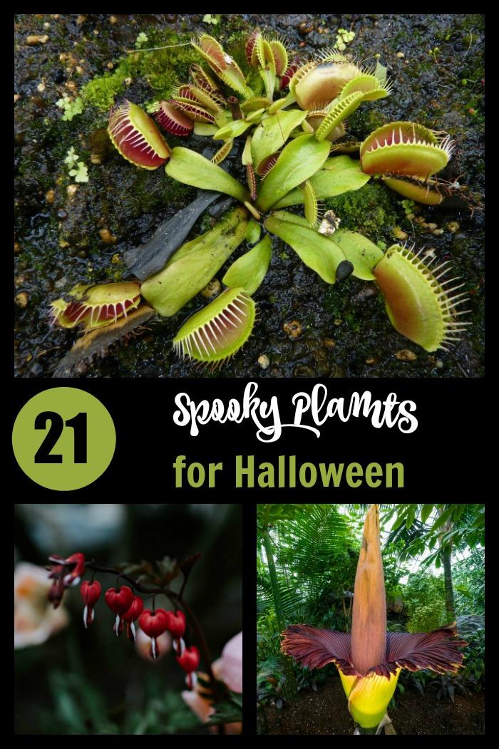 21 spooky Halloween plants