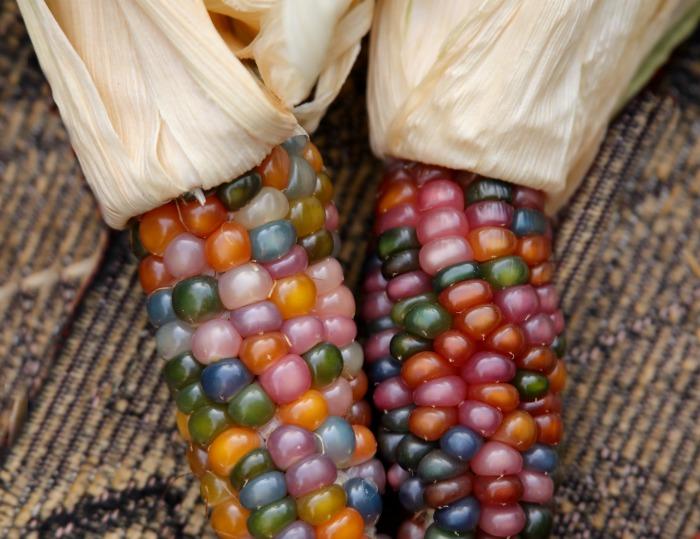 Glass gem corn on burlap.