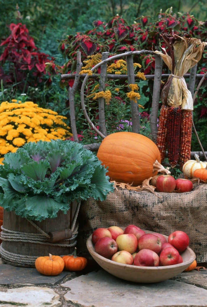 Harvest display using indian corn, Kale and apples