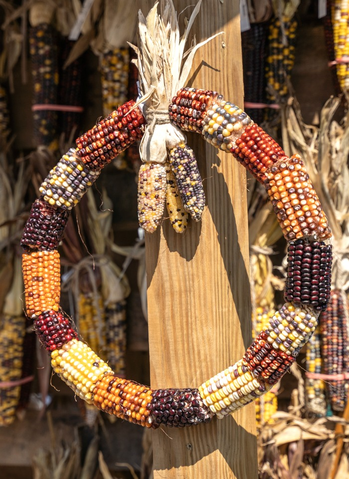 Indian corn circular wreath.