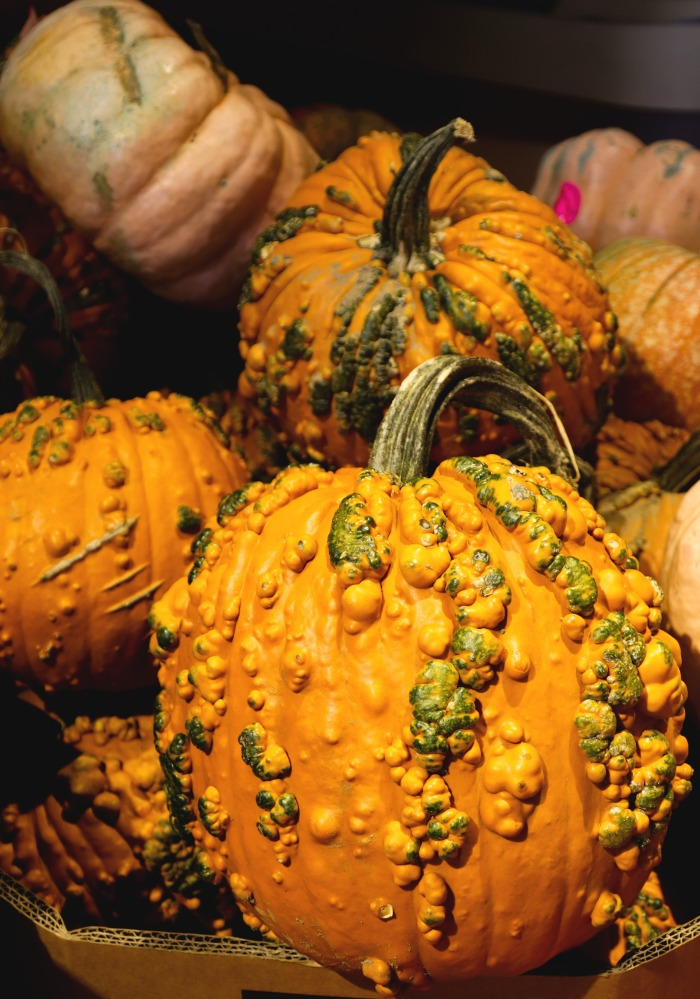 Knucklehead pumpkins can grow to 12-16 pounds.
