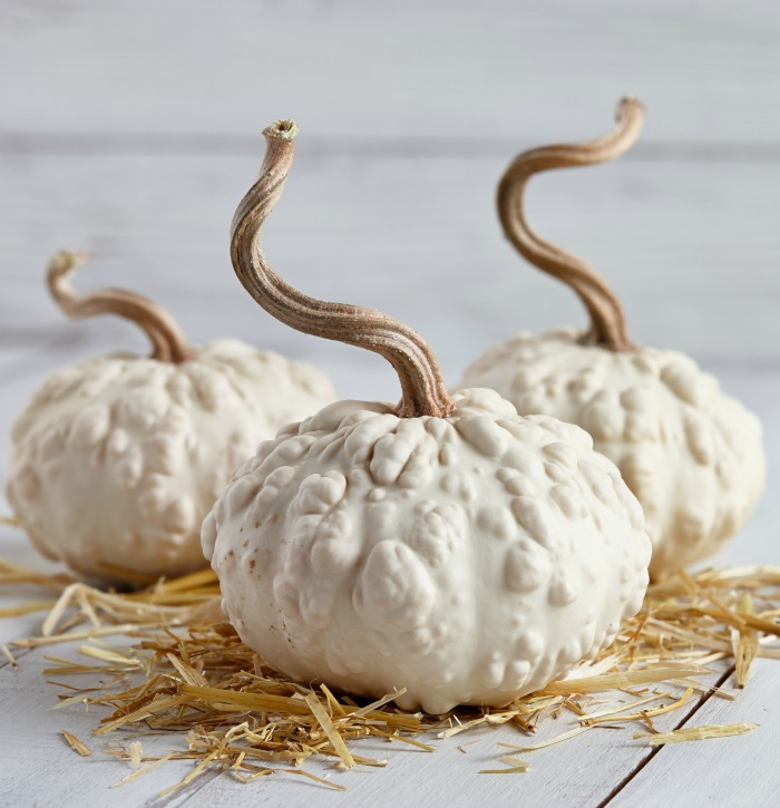 White warty pumpkins painted white with stems painted gold.