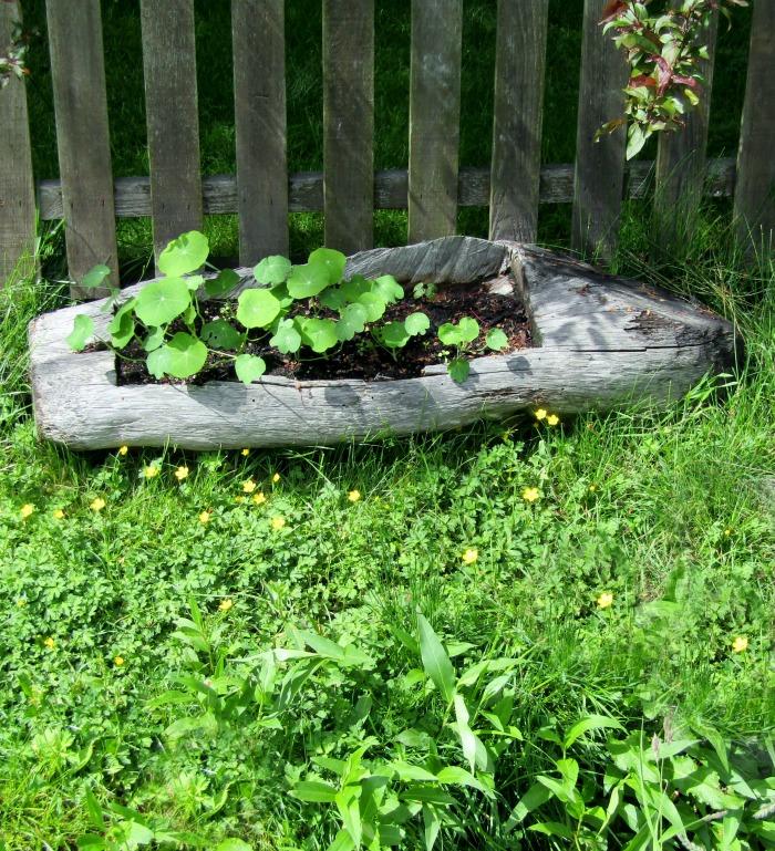 Boat shaped tree planter,
