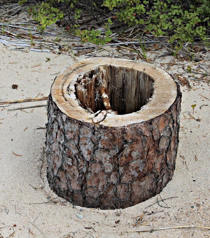 A log with a hollowed out center.