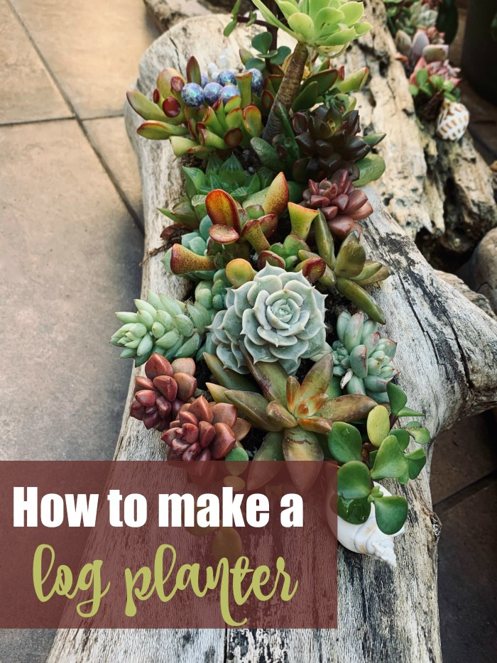 """Succulents planted in a log with the words """"how to make a log planter."""