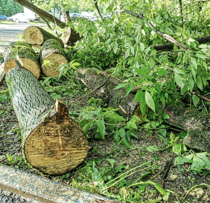 Loos from storm damage can be used to make planters