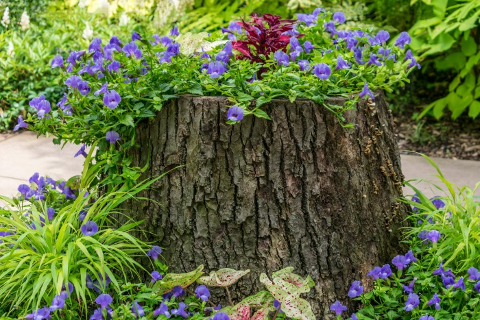 Tree stump planted with flowers.