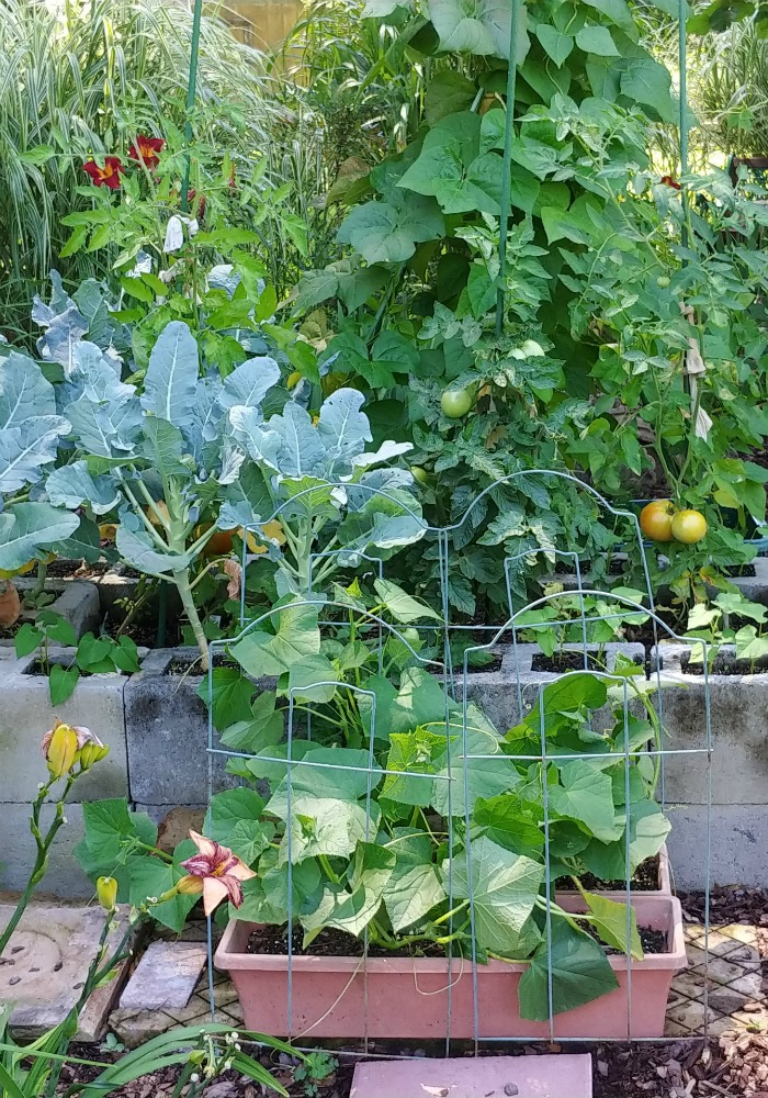 Raised vegetable garden bed with cucumbers, broccoli, tomatoes and beans. Protect the environment by growing veggies.