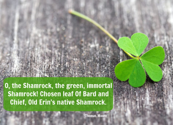 Shamrock ona wood background with quote by Thomas Moore.