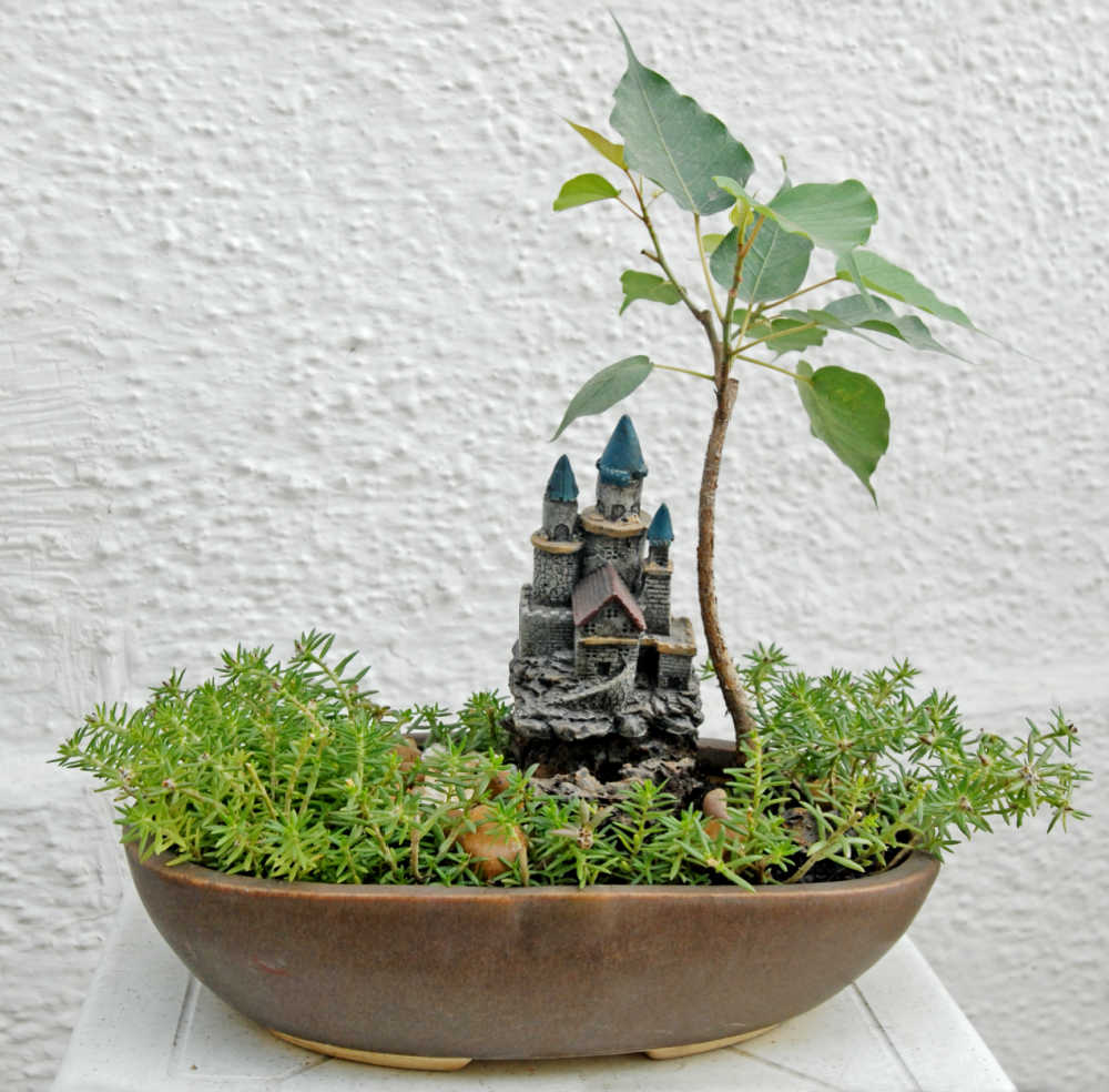 Ficus religiosa or Peepala bonsai with a small building in a bonsai pot. It is thought to be a lucky plant.