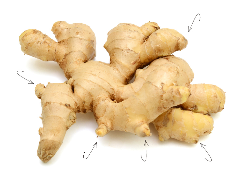 Piece of ginger root with arrows pointing to the eyes.
