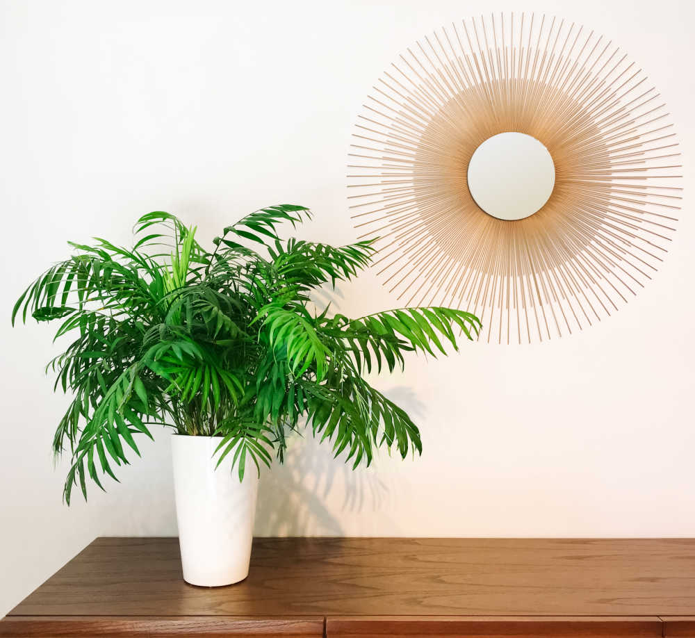 Parlor palm in a white pot on a table with a large sun wall hanging near by.
