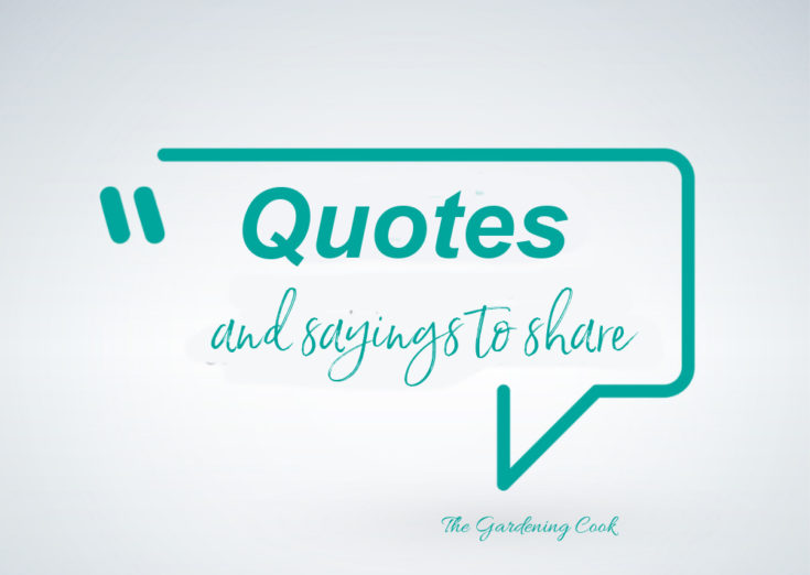 Teal Quote bubble with the words Quotes and sayings to share.
