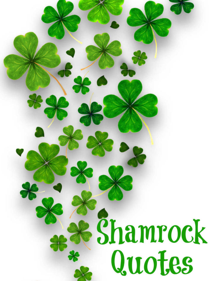 "Shamrocks on a white background with words reading ""Shamrock Quotes."""