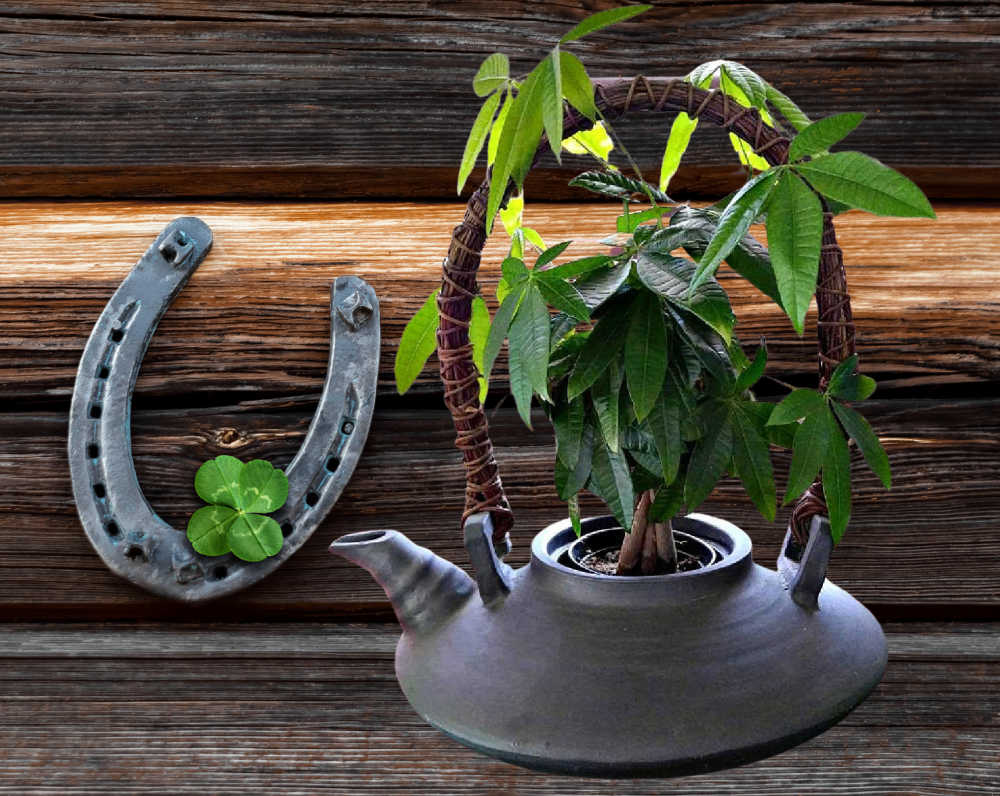Braided money tree plant in a kettle with a horseshoe nd shmrock.