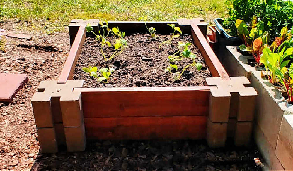 DIY raised garden bed - easy and quick garden bed planted with cucumbers.