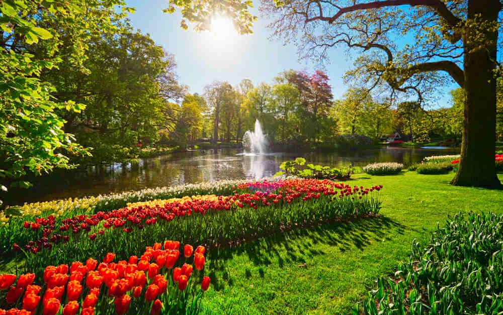 Keukenhof flower garden with blooming tulip flowerbeds - sunny location under trees.