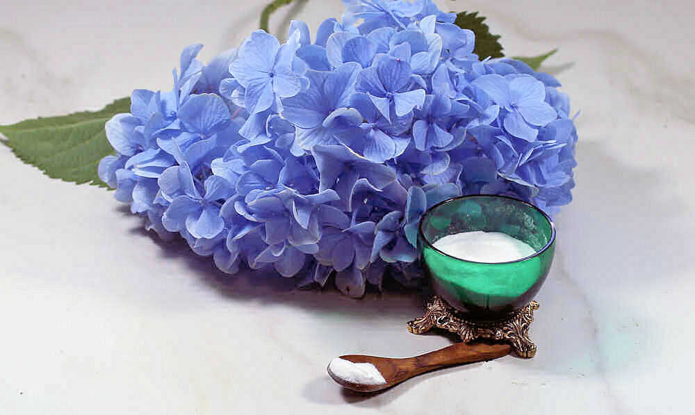 Container of baking soda with a small spoon in front of a hydrangea blossom.