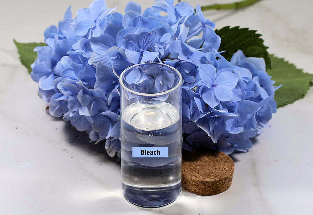 Blue hydrangea blossom and container of bleach.