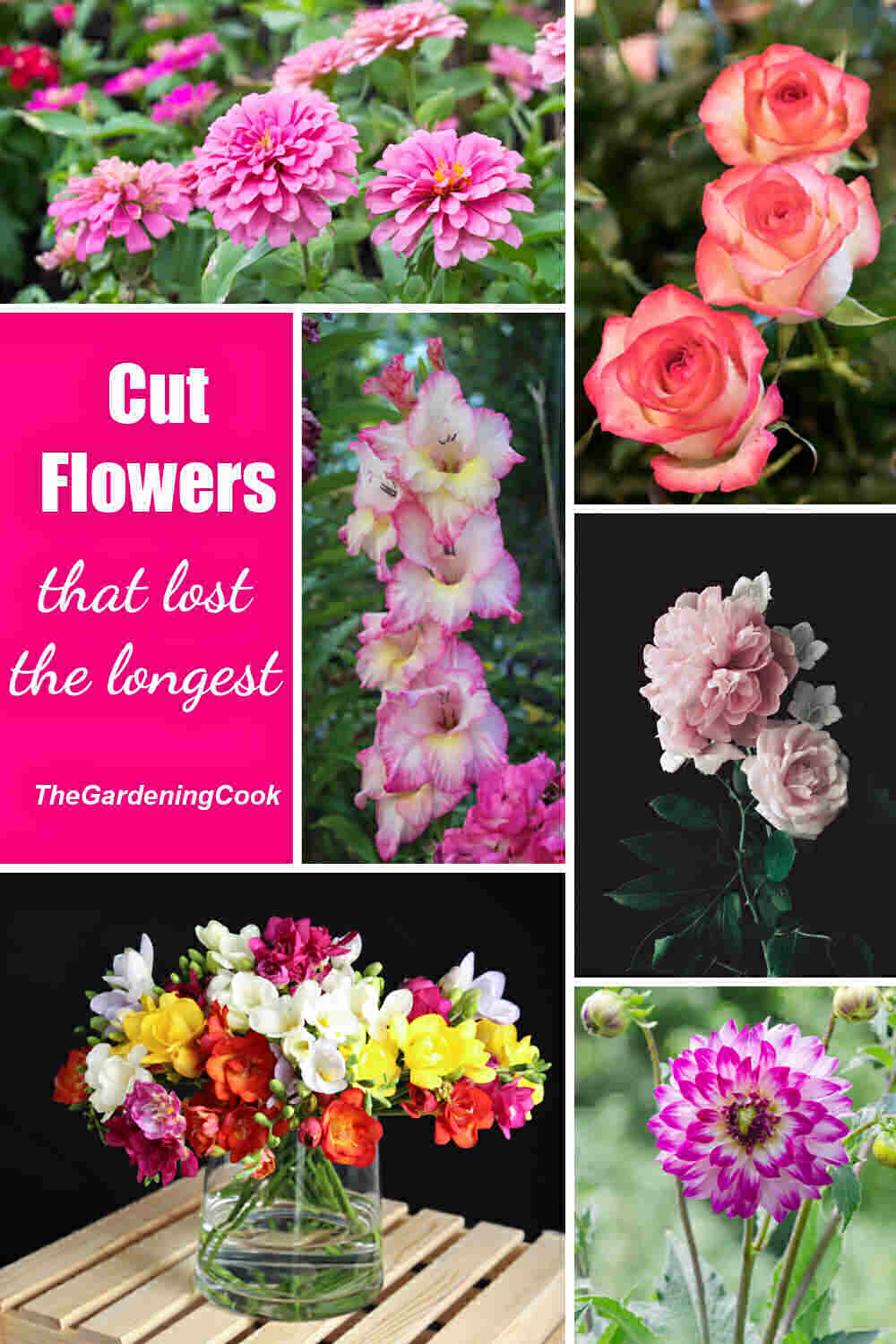 Collage with peonies, roses, zinnia, freesia, gladiola and zinnias and words reading Cut Flowers that last the longest.