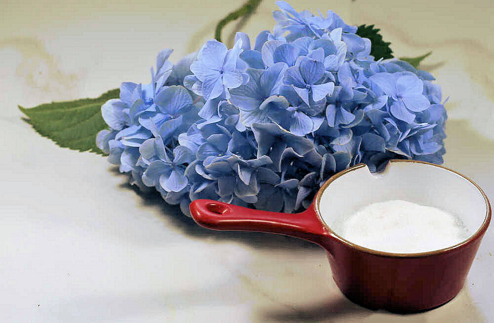 Small container of granulated sugar and hydrangea blossom.
