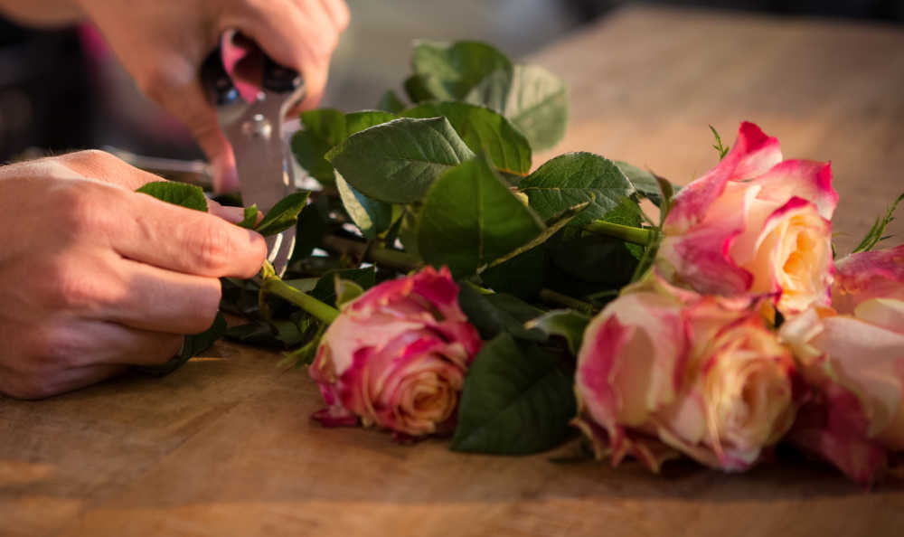 How to keep cut flowers fresh - hands trimming leaves from roses.