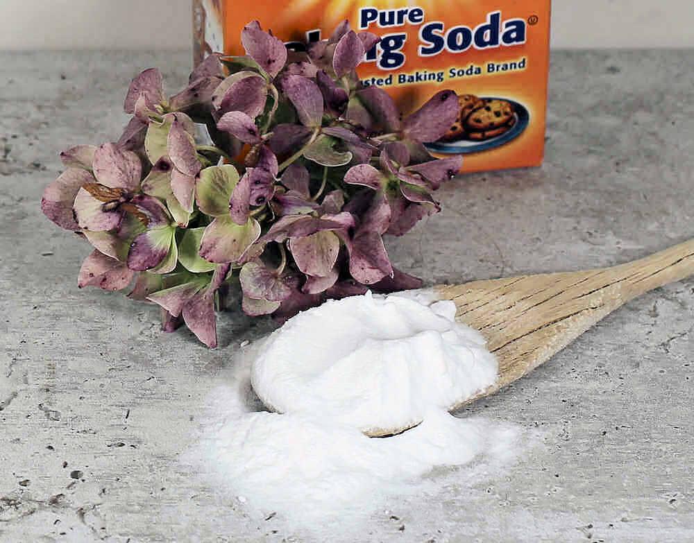 spoonful of baking soda and hydrangea flower.