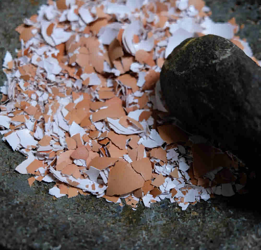 Crushed egg shells in a mortar and pestle.